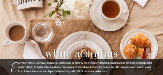acanthuswhite